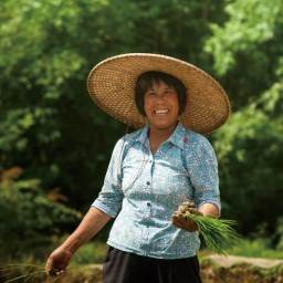Rice Harmony: Growing an Organic CSA in the Pearl River Delta