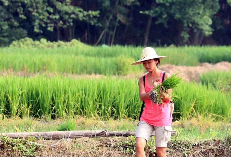 RiceHarmony2