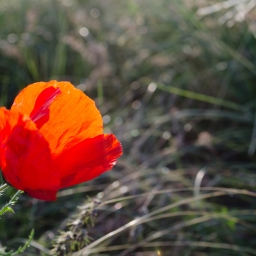Poppies on the Great Grass Sea: 16 Photos From My Ride Through Xinjiang and Kazakhstan